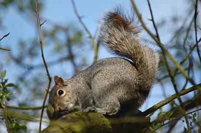 Squirrel Glances Back Art Print