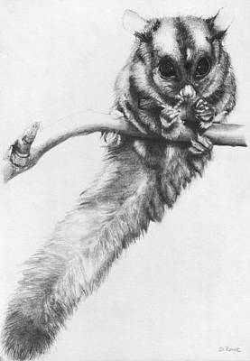 Art Print featuring the drawing Squirrel Glider by Shawna Rowe