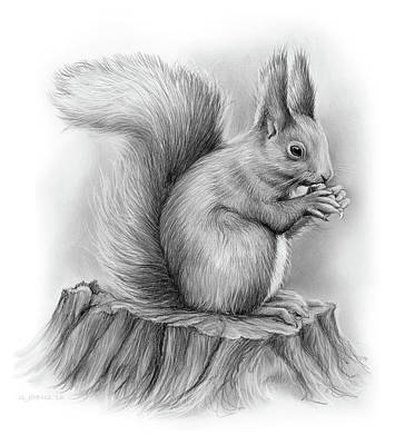 Animals Drawings - Squirrel by Greg Joens