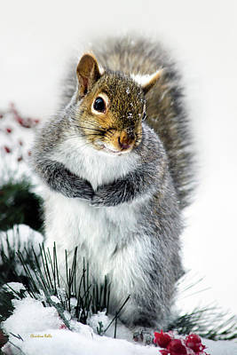 Photograph - Squirrel In Snow by Christina Rollo