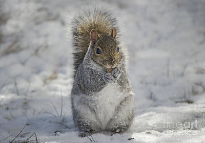 Photograph - Squirrel In Snow by Rima Biswas