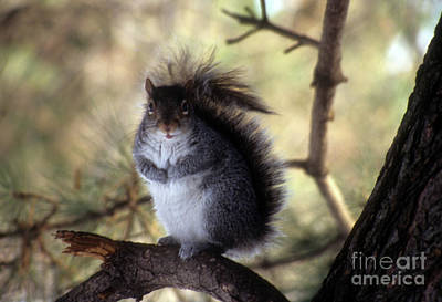 Photograph - Squirrel In The Garden by Mark Gilman