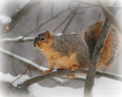 Art Print featuring the photograph Squirrel  In The Maple Tree 3 by Lila Fisher-Wenzel