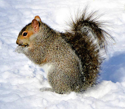 Photograph - Squirrel In The Snow by Cristina Stefan