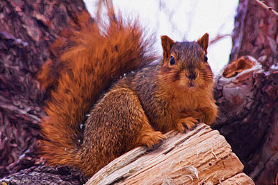 Photograph - Squirrel In Tree by Anna Louise