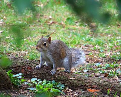 Photograph - Squirrel by Jai Johnson