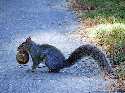 Photograph - Squirrel  by Jamie Johnson