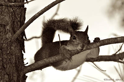 Cute Tree Images Photograph - Squirrel Just Hanging Out by Elizabeth Abbott