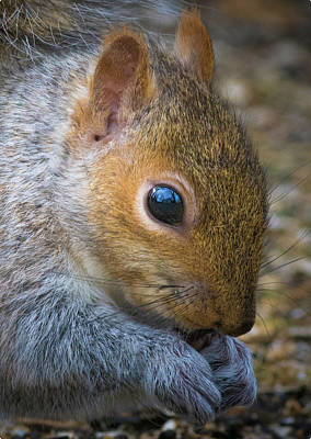 Photograph - Squirrel by Kenneth Cole