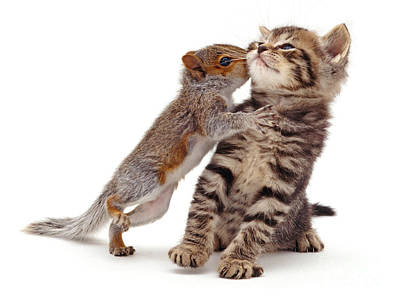 Photograph - Squirrel Kiss by Warren Photographic