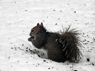 Photograph - Squirrel Lunch by Betty-Anne McDonald