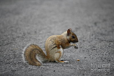 Photograph - Squirrel by Mary-Lee Sanders