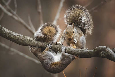 Photograph - Squirrel Mayhem by Jessica Nelson