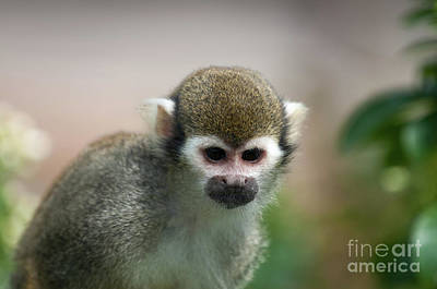 Squirrel Photograph - Squirrel Monkey by Amanda Elwell