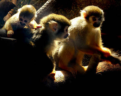 Photograph - Squirrel Monkey by Captain Debbie Ritter