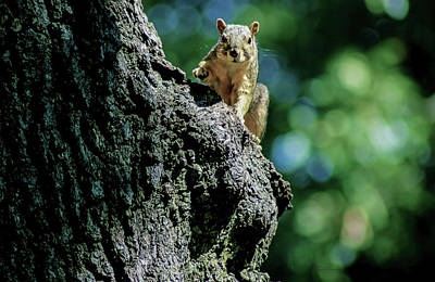 Photograph - Squirrel On Alert by Susan Vineyard