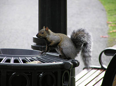 Squirrel On Garbage Can Art Print by Richard Mitchell