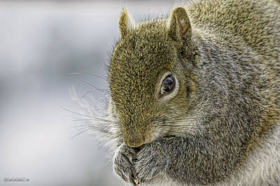 Photograph - Squirrel On Macomb Orchard Trail by LeeAnn McLaneGoetz McLaneGoetzStudioLLCcom