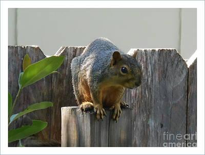 Art Print featuring the photograph Squirrel On Post by Felipe Adan Lerma