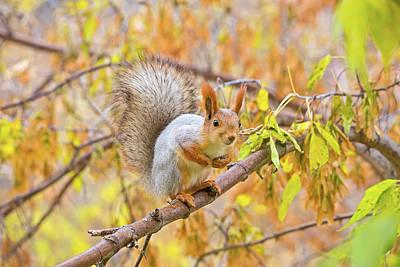 Animal Photograph - Squirrel On The Branch by Oksana Ariskina