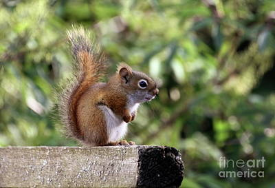 Squirrel On The Edge Art Print by Marjorie Imbeau