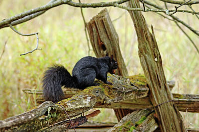Photograph - Squirrel On The Rails by Debbie Oppermann