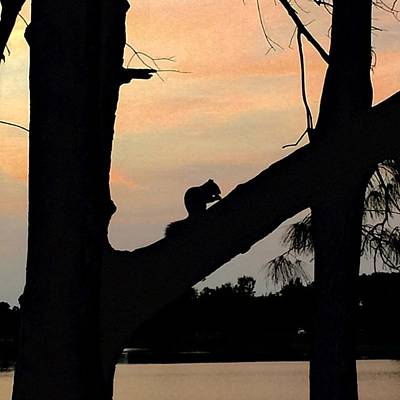 Animals Wall Art - Photograph - Squirrel On Tree At Sunset by Juan Silva