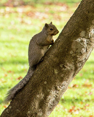 Photograph - Squirrel On Tree by Marilyn Wilson