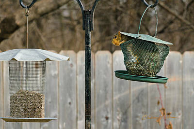 Photograph - Squirrel Pantry  by Edward Peterson