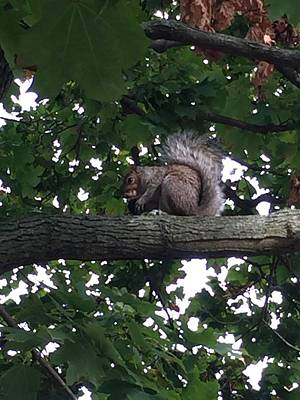Photograph - Squirrel by Parker ODonnell