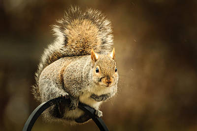 Photograph - Squirrel Perch by Joni Eskridge