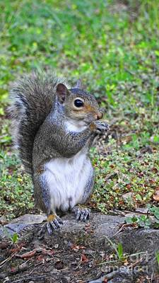 Photograph - Squirrel Photograph Art by Ella Kaye Dickey