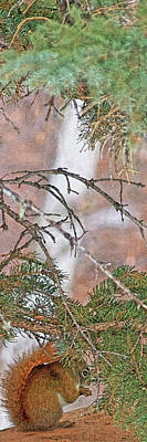 Photograph - Squirrel, Pine Tree And A Nut by Amanda Smith