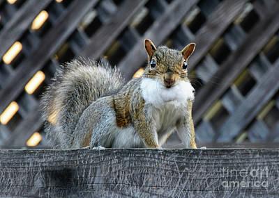 Photograph - Squirrel Playing Santa by Susan Wiedmann