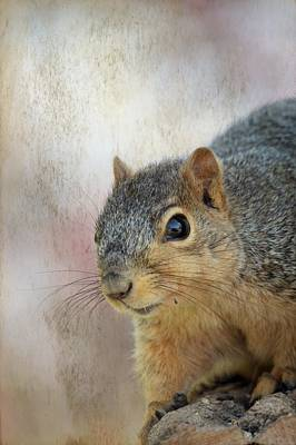 Photograph - Squirrel Portrait 2 by Bonfire Photography