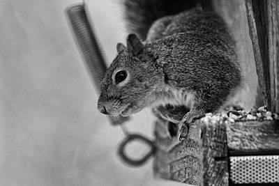 Photograph - Squirrel Portrait   by Joseph Caban