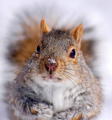 Squirrel Portrait Art Print by Mircea Costina Photography
