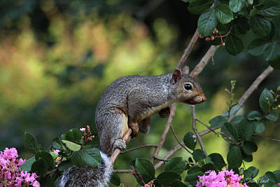 Photograph - Squirrel Portrait by Trina Ansel