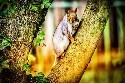 Photograph - Squirrel Pose  by Cliff Norton