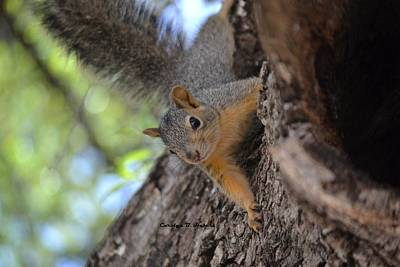 Wall Art - Photograph - Squirrel Protecting Its Home by Carolyn Hebert