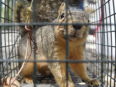 Photograph - Squirrel Relocation Program by James Granberry