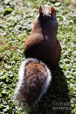 Squirrel S Back Art Print