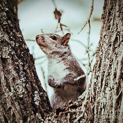Photograph - Squirrel Sense by Kerri Farley