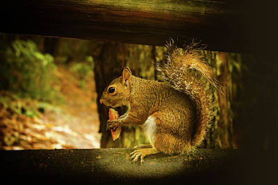 Photograph - Squirrel Series 9010 by Carlos Diaz