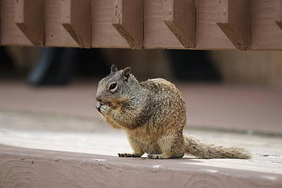 Photograph - Squirrel Snack 2  by Christy Pooschke