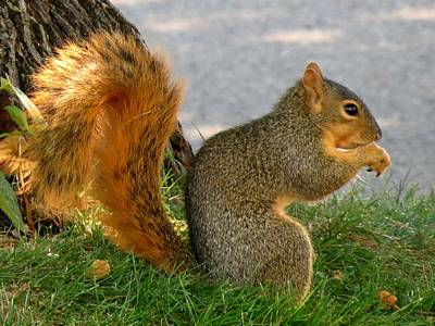 Photograph - Squirrel Time by Kyle West