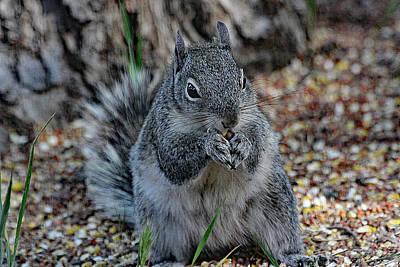 Digital Art - Squirrel Under The Bird Feeder, by Tom Janca