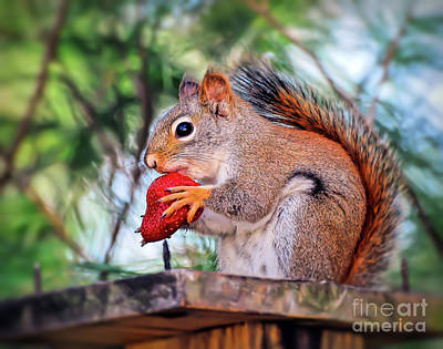 Photograph - Squirrel With A Strawberry by Kerri Farley
