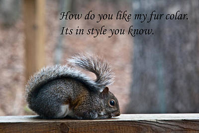 Photograph - Squirrel With Fur Collar by Douglas Barnett