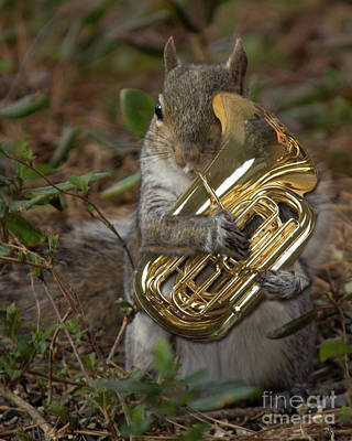 Digital Art - Squirrel With His Tuba by Sandra Clark